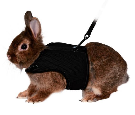 Ошейник для кроликов